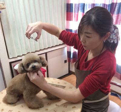 P-Foreverは札幌市北区新琴似の小型犬専門の自宅トリミングハウス